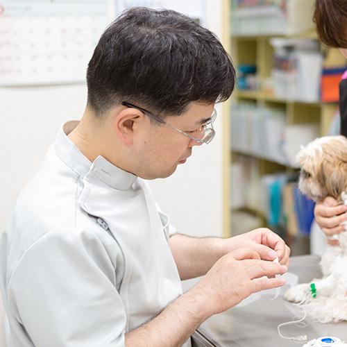 犬のアレルギーと皮膚疾患