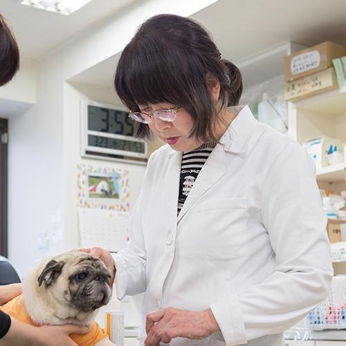 犬の膿皮症・耳道閉塞、原因と治療法
