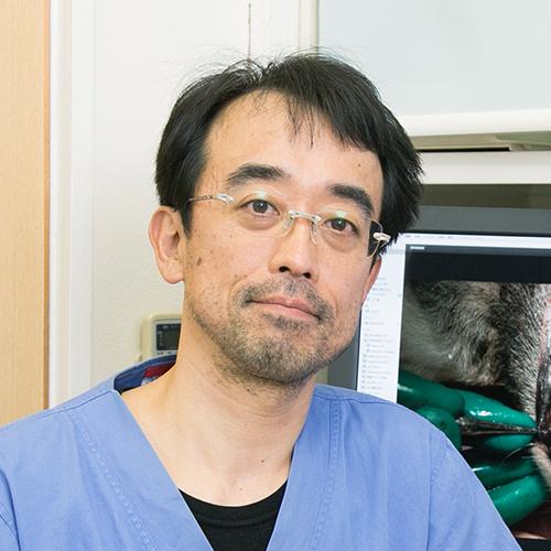 犬と猫の包括的な歯科治療の実践